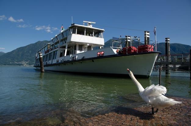 Cisne en la orilla y un barco en la bahía