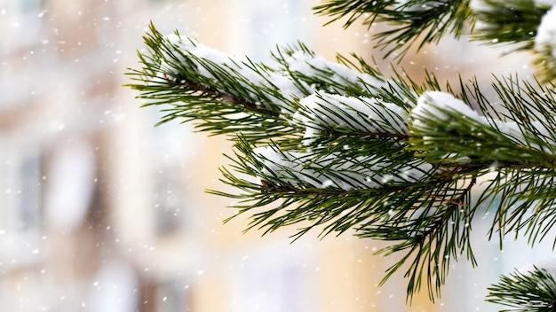 Ciudad de invierno, rama de abeto cubierto de nieve