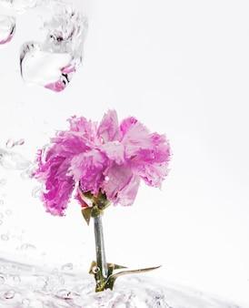Clavel rosa cayendo al agua