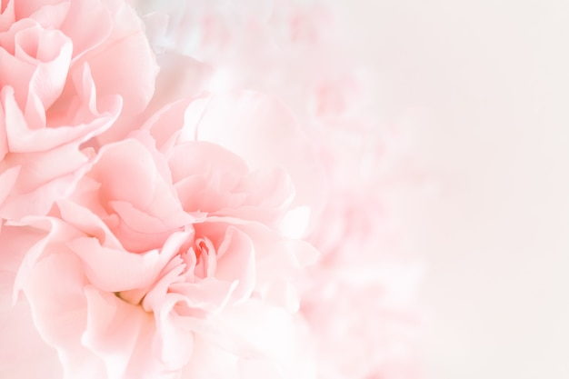 El clavel rosado florece el ramo.