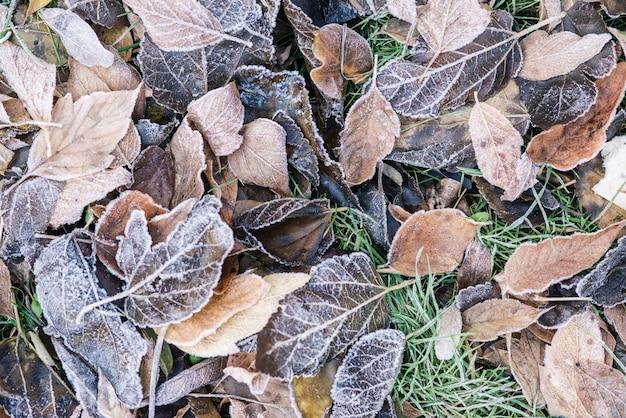 Clima frío y hojas congeladas y césped ver al aire libre