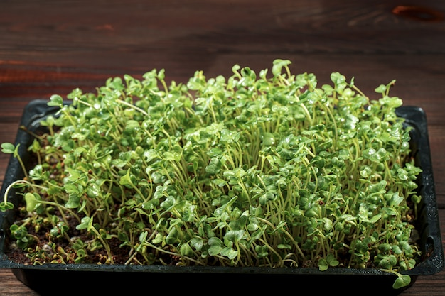 Close-up de brócoli microgreens en la caja de madera