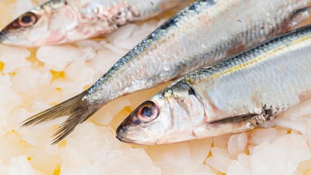 Close-up caballas peces en cubitos de hielo