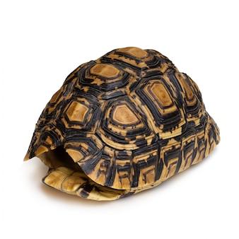 Close-up de caparazón de tortuga aislado sobre un fondo blanco.