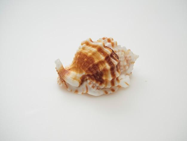 Close-up conchas colocadas sobre un fondo blanco