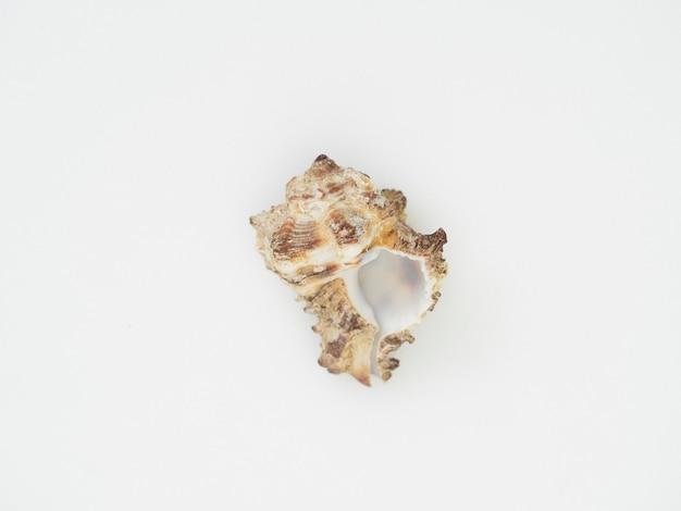 Close-up conchas colocadas