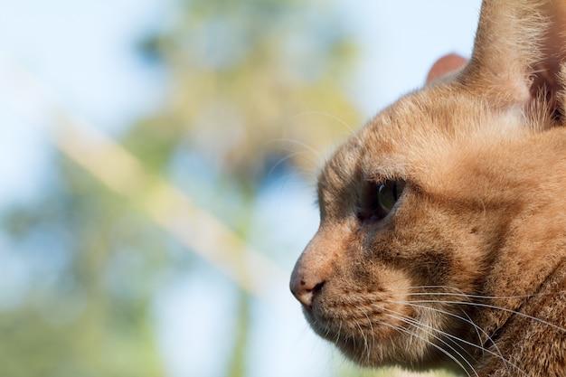 Close up cute jengibre gato atigrado se centran en el ojo