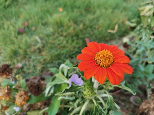 Close-up flores naranjas en verde