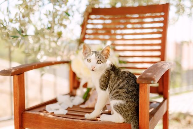 Close-up de un gato gris y blanco sentado en una silla de madera