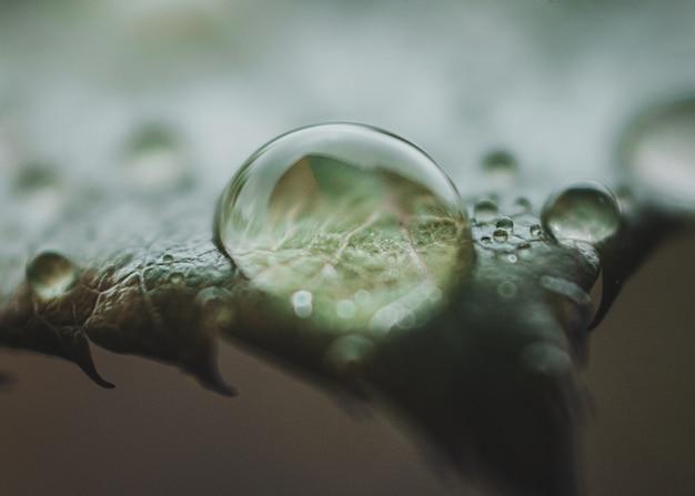 Close-up de una gota de agua sobre la hoja de una planta