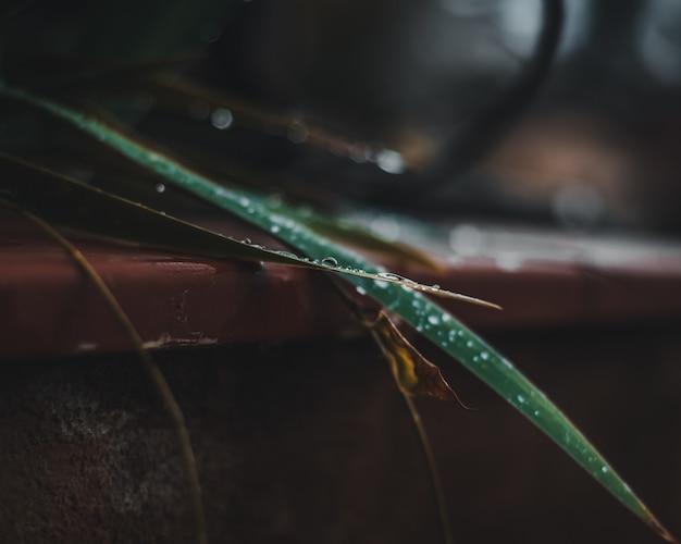 Close-up de gotas de agua en la licencia de una planta