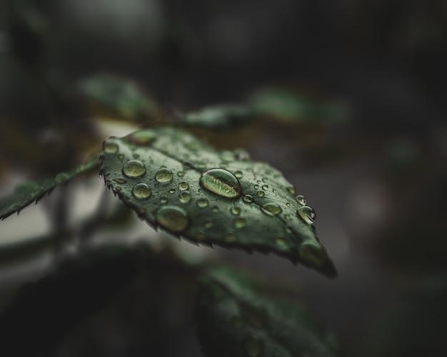 Close-up de gotas de agua sobre las hojas de la planta