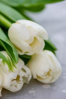 Close-up hermosos tulipanes blancos