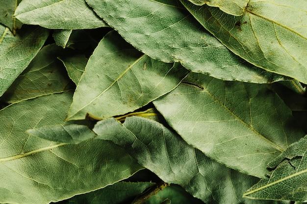 Close-up hojas de laurel