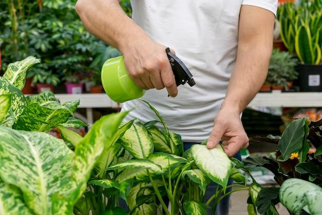 Close-up hombre regando las plantas de interior