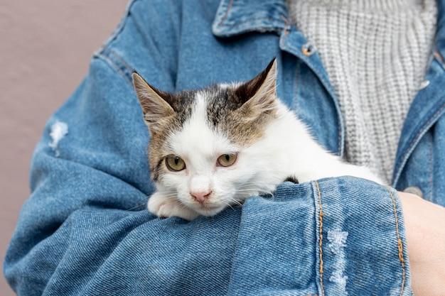 Close-up lindo gato doméstico sentado en brazos del propietario