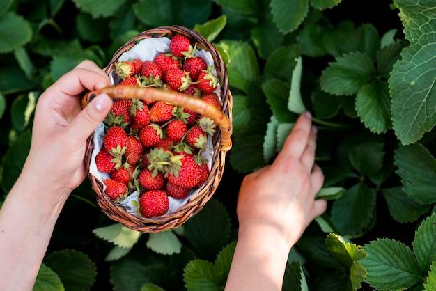 Close-up manos sosteniendo cesta de frutas