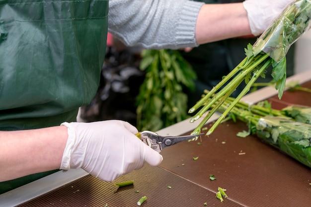 Close-up mujer cortando raíces de flores