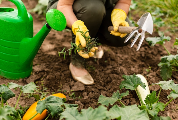 Close-up mujer cuidando los cultivos