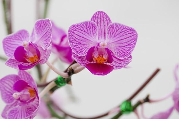Close - up de orquídeas flores