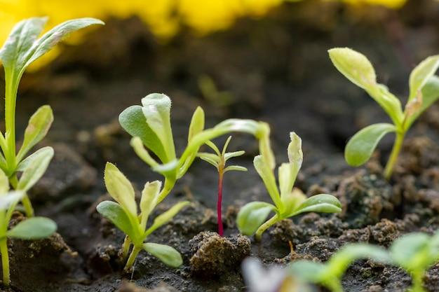 Close-up pequeñas plantas orgánicas