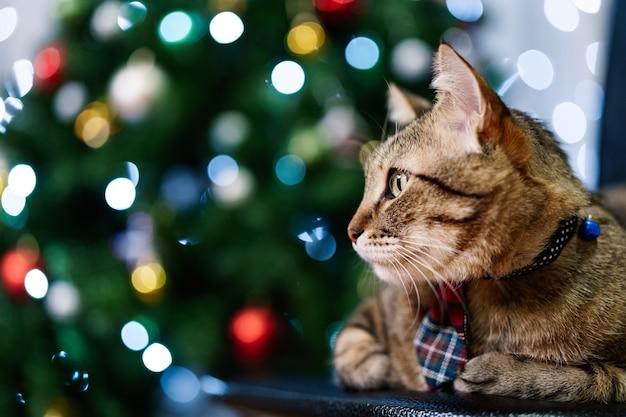 Close-up retrato de un gato atigrado gris de casa vistiendo una corbata a cuadros
