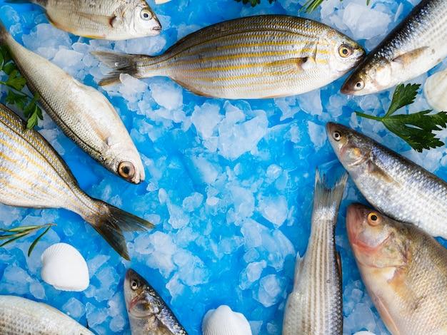 Close-up variedad de peces frescos en hielo