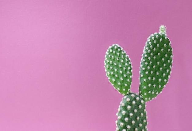 Closeup cactus sobre fondo rosa
