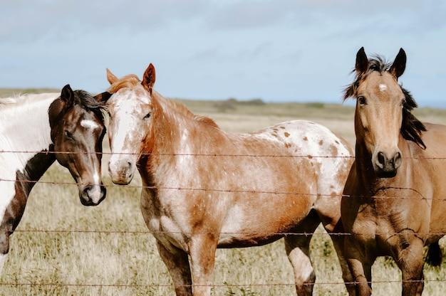 Closeup foto de caballos detrás de una valla
