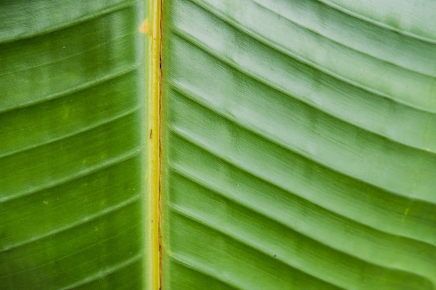 Closeup foto de una gran hoja verde mojada hermosa