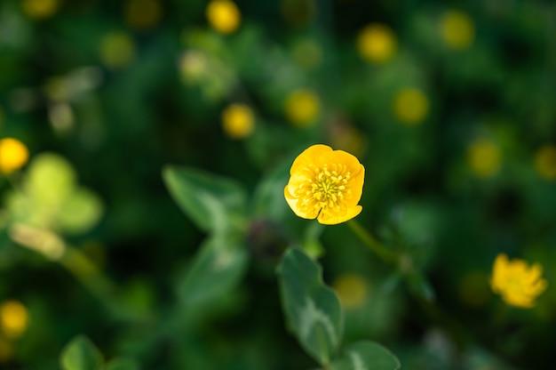 Closeup foto de hermosas flores silvestres amarillas