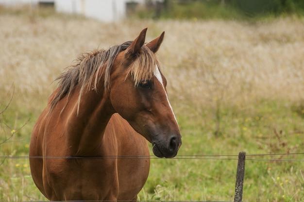 Closeup foto de un hermoso caballo marrón con una noble apariencia de pie en el campo
