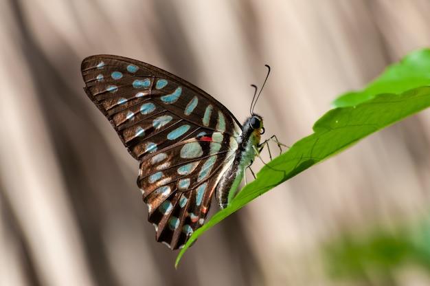 Closeup foto de una mariposa con patas de cepillo sobre una planta verde