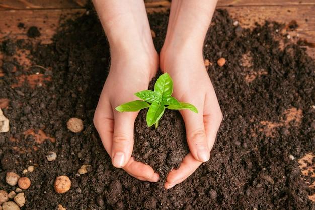 Closeup foto de una mujer sosteniendo una planta verde en la palma de su mano