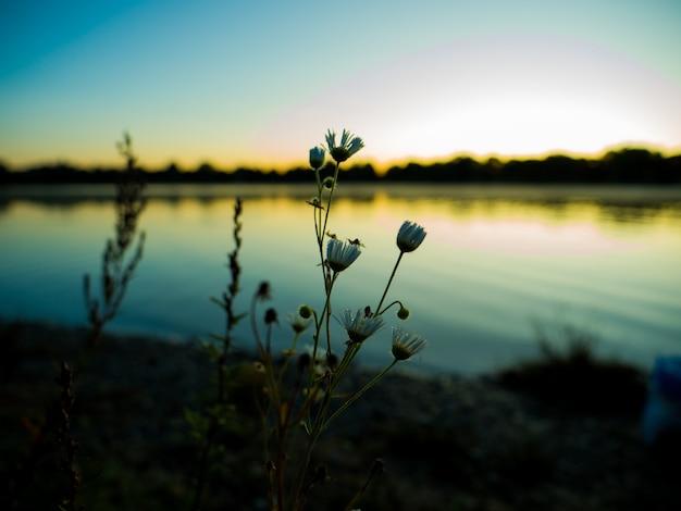 Closeup foto de pequeñas flores blancas