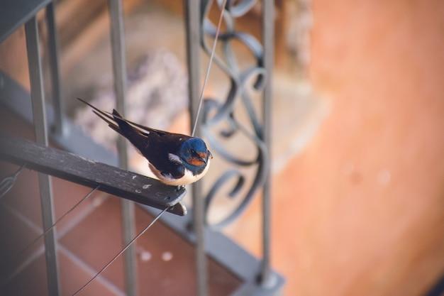 Closeup foto de un pequeño acantilado lindo golondrina descansando sobre una cuerda de secado de tela cerca de un balcón
