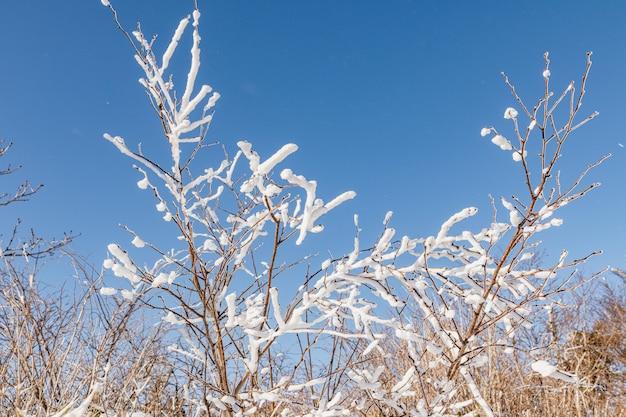 Closeup foto de ramas de madera cubiertas de nieve blanca