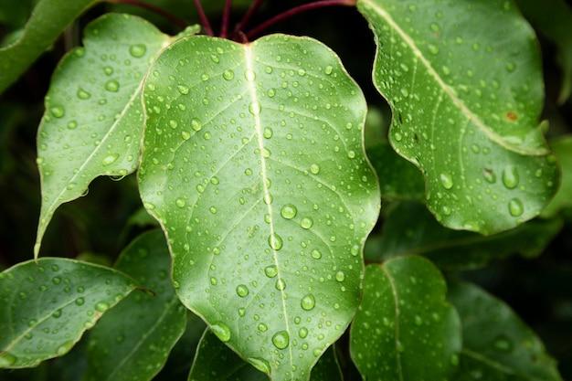 Closeup gotas de lluvia sobre hojas verdes