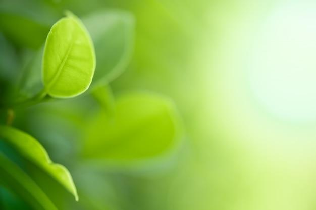 Closeup hermosa vista de la naturaleza hojas verdes sobre fondo de árbol verde borrosa con luz solar