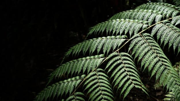 Closeup hojas exóticas