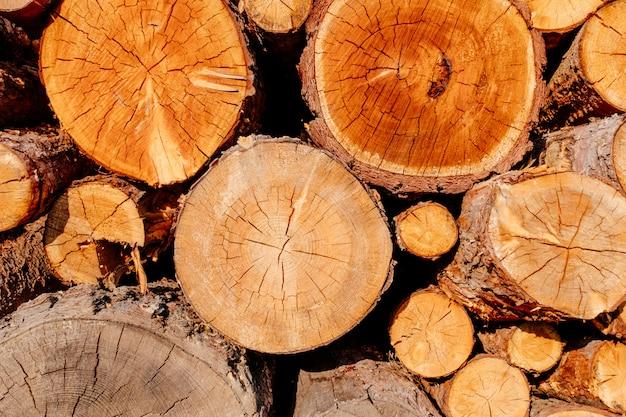 Closeup madera rebanada troncos transversales sección del árbol amarillo marrón