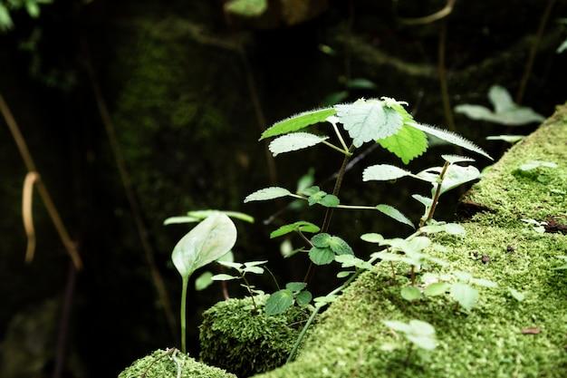 Closeup plantas y musgo con fondo borroso