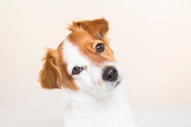 Closeup retrato de un lindo perrito sentado en la cama