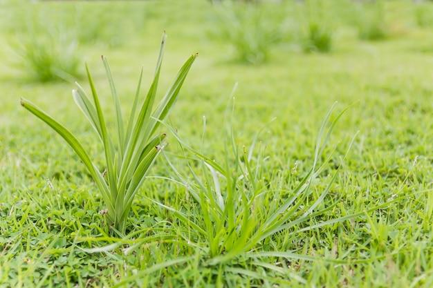 Closeup verde hierba en el campo