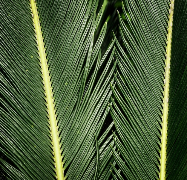 Closeup verde hojas tropicales
