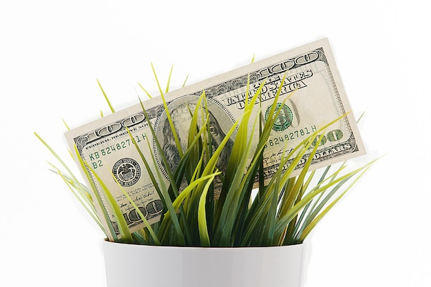 Cobre cien billetes estadounidenses en el césped aislado sobre un fondo blanco.