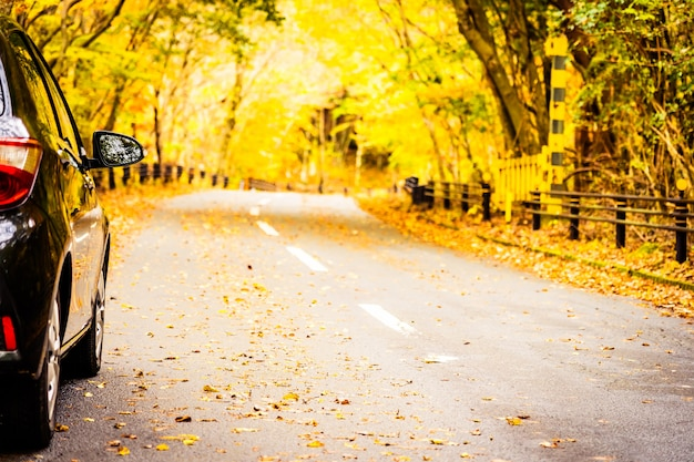 Coche en la carretera en el bosque de otoño
