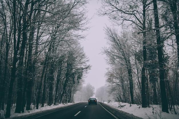 Coche en la carretera a través de un parque de invierno