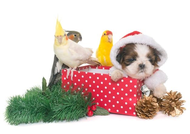 Cockatiel y perro en caja