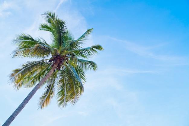 Cocotero con cielo azul
